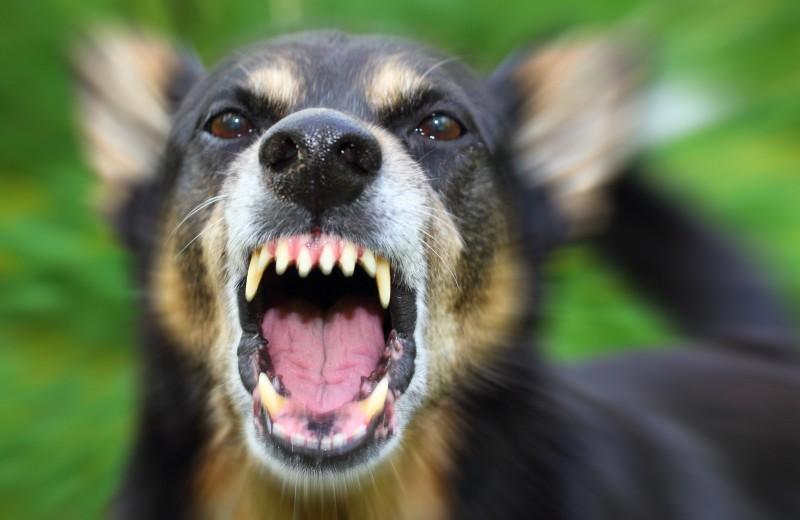 Собака-кусака: топ-5 самых мощных собачьих челюстей