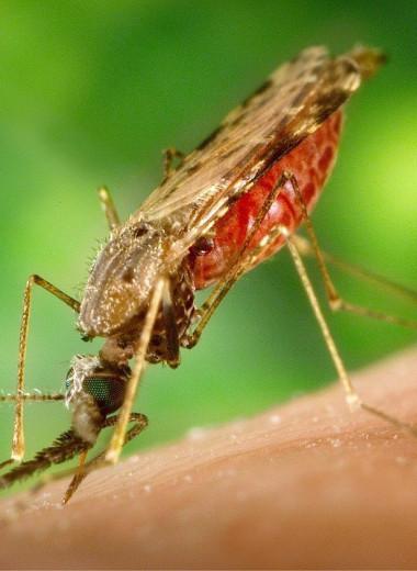 Китай объявлен страной, свободной от малярии