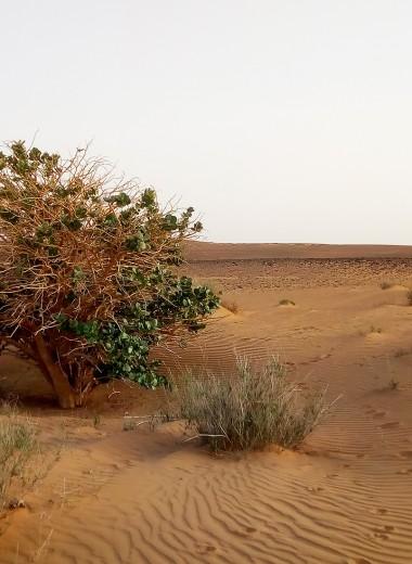 Одна вокруг света.Как почувствовать себя кинозвездой в Судане