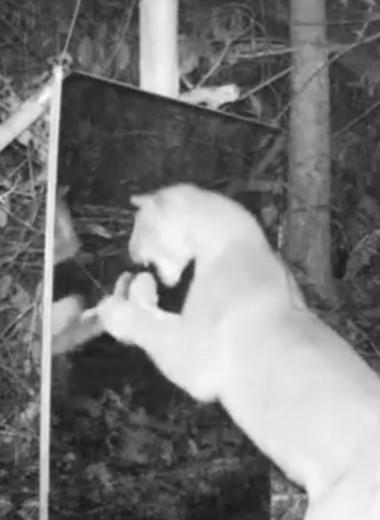 Животные и зеркало: лесной эксперимент