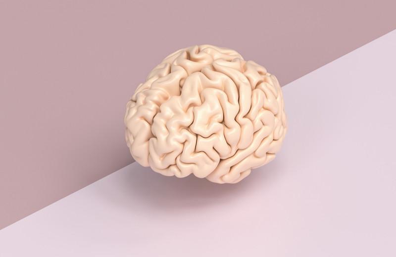 Тренировки, правильное питание, медитации и красота: что нужно мозгу
