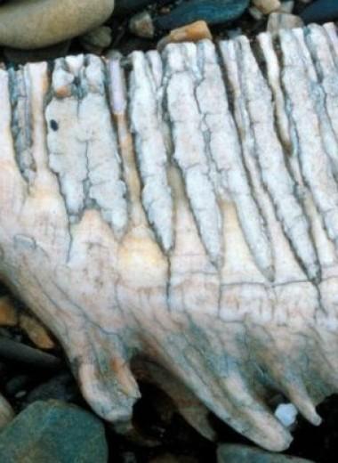 Почему вымерли шерстистые мамонты: удивительные загадки природы