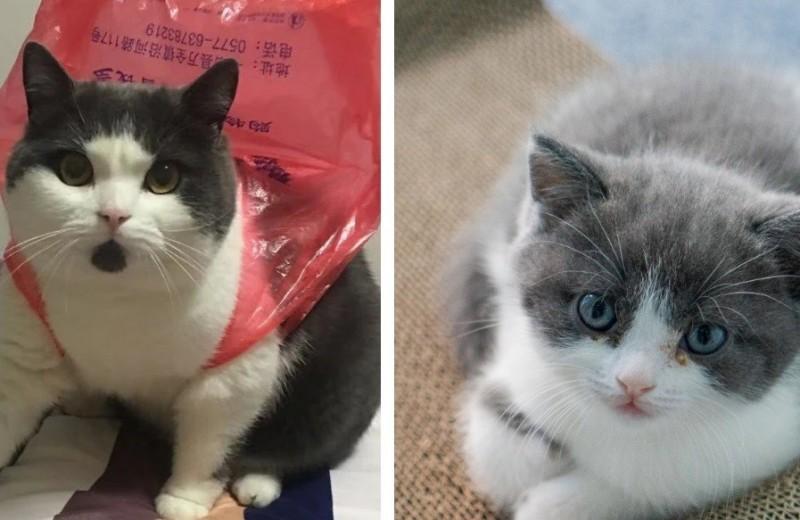 Первый в мире клонированный кот оказался совершенно не похож на оригинал
