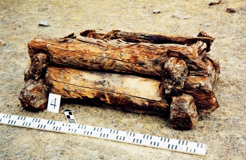 Летопись в кольцах: бревна рассказали историю древних кочевников