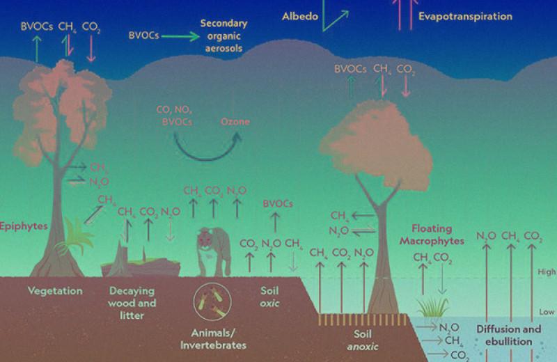 Ученые подтвердили преобладание выбросов парниковых газов в тропиках Амазонки