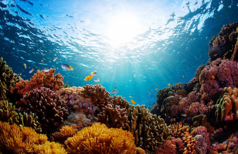 Теневая экономика: главные обитатели коралловых рифов и их роли в подводном обществе