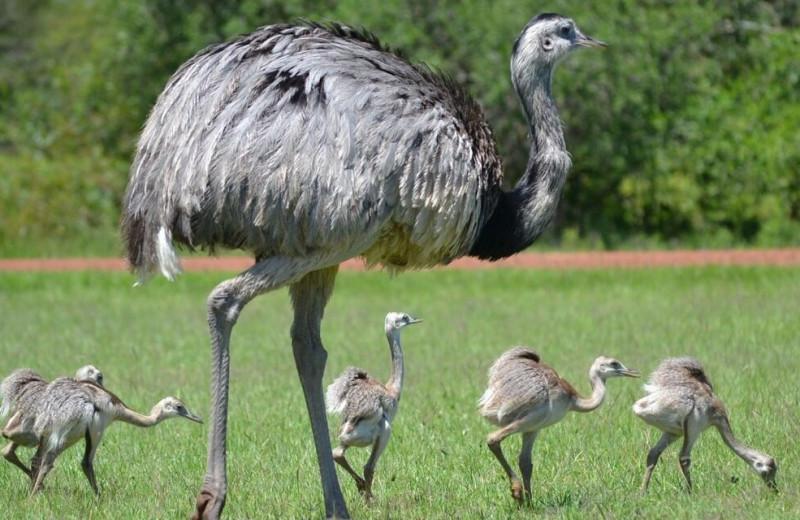 День отца: 5 самцов из мира дикой природы, которые посвятили себя родительству