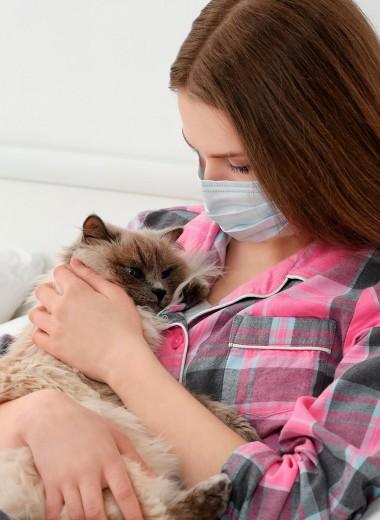 Аллергия на кошек: что делать, чтобы не расставаться с пушистым другом
