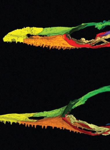 Принятой за крошечного динозавра ящерице из бирманского янтаря нашли близкого родственника