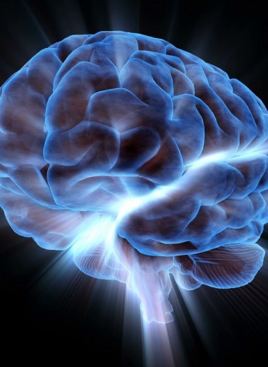 Зачем в Сибири выращивают человеческие мозги