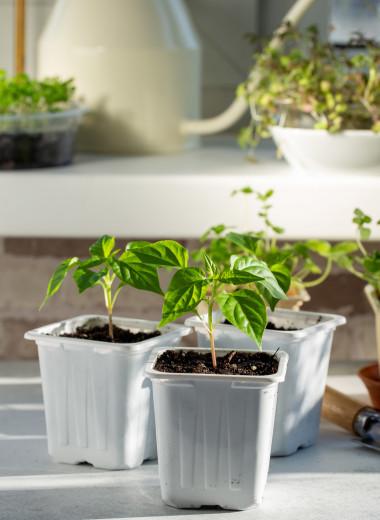 Огород на подоконнике: почему он вам нужен и как завести собственный