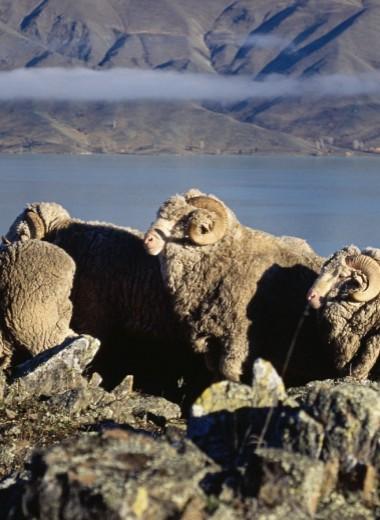 Как сделать производство шерсти более экологичным?