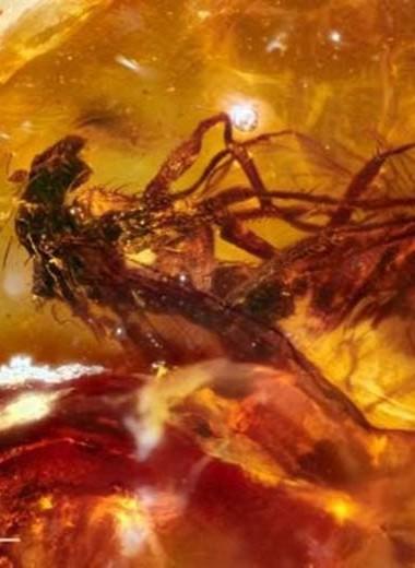 Мухи застыли в древнем янтаре во время спаривания: редкая находка