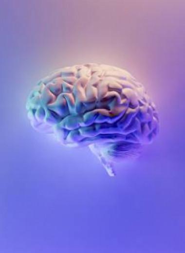 Как выглядит мозг бесстрашного человека — и можно ли сделать свой таким же?