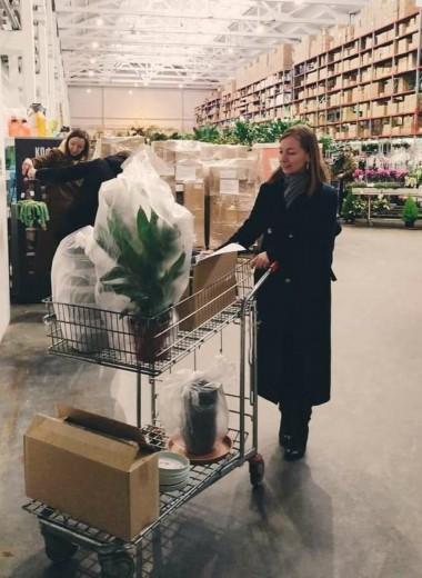 Выращивать растения дома и продавать в интернете: сколько можно заработать и с какими трудностями предстоит столкнуться