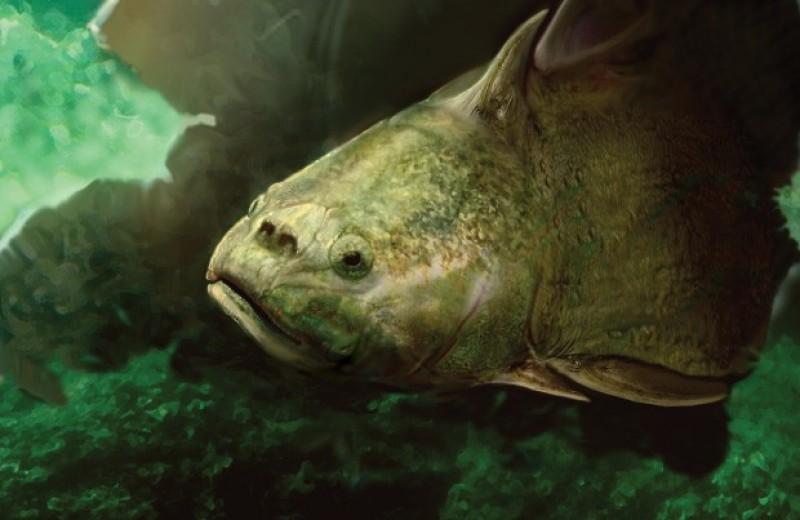 Палеонтологи уточнили устройство первых зубов