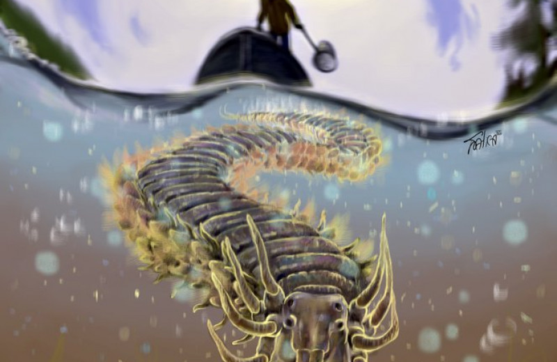 Российские ученые раскрыли секрет червей со сверхспособностями к регенерации