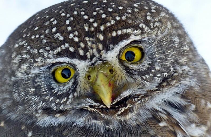 Мир глазами птиц: новые знания о зрении пернатых