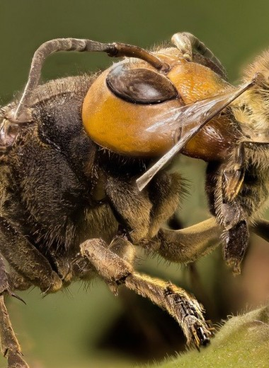10 насекомых, из-за которых вы передумаете посещать Японию