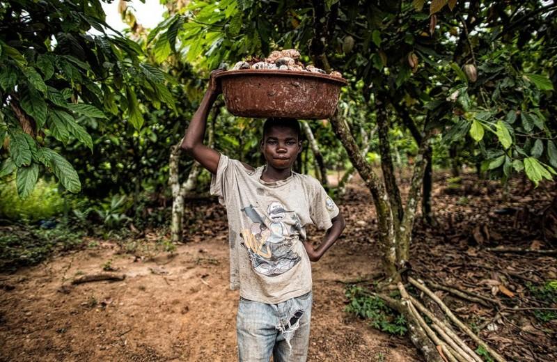 Сколько стоит освобождение от рабства, или неожиданная связь между детьми и шоколадом