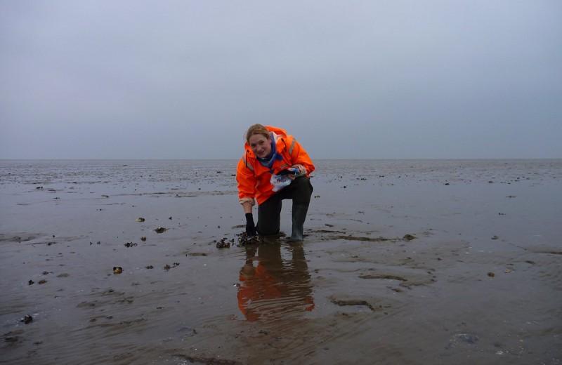 Морские губки способны удалять до 94% вирусов из воды