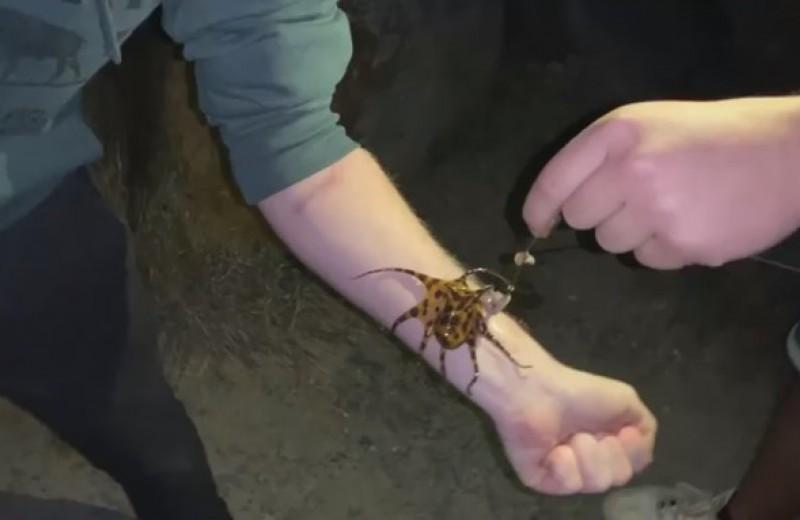 Рыбаки играют со смертельно опасным осьминогом, яда которого хватает на 26 человек (видео)