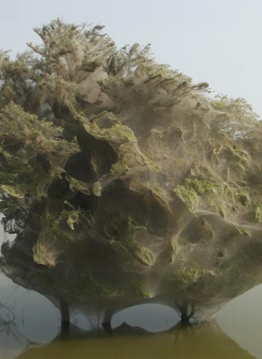 Сложно поверить: самые удивительные и странные фотографии мира науки и природы
