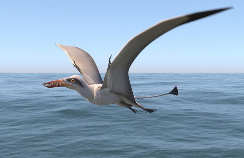 В Чили обнаружили доисторического крылатого ящера
