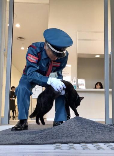 «Ты не пройдешь!» Охранник уже два года не пускает котов в японский музей