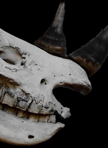 Загадочная находка на Филиппинах поставила антропологов в тупик