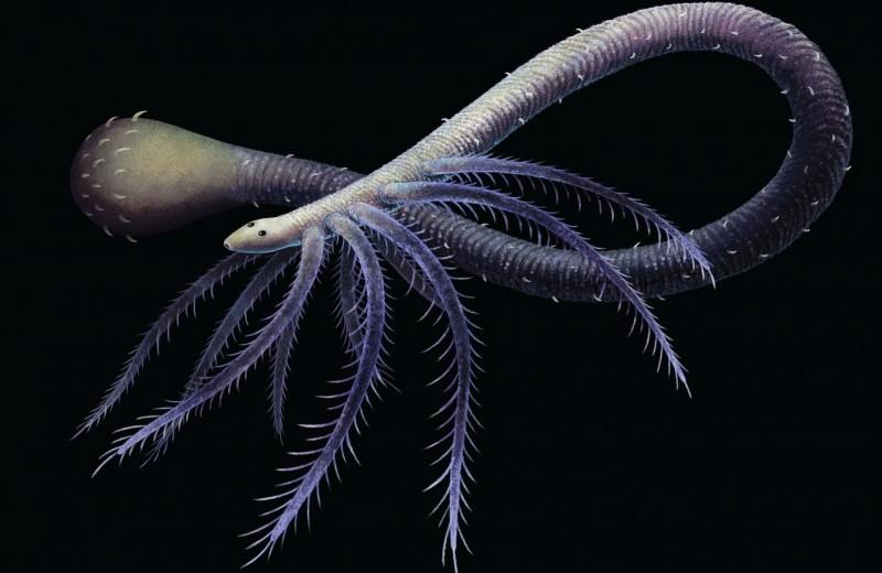 Странный древний червь отбросил ноги и обзавелся трубкой