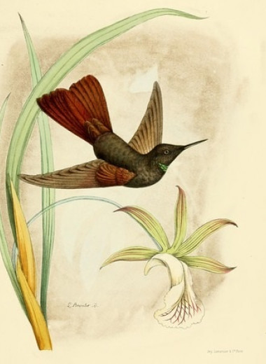Высокогорный колибри остыл до 3,26 градуса Цельсия