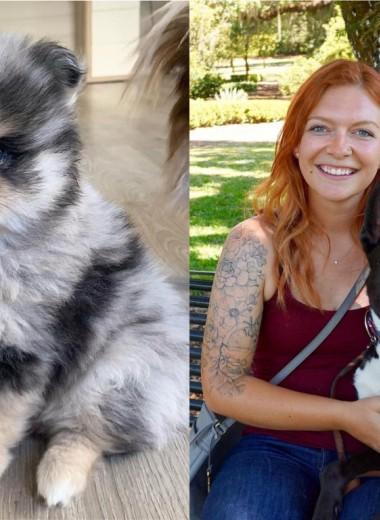 17 собак-метисов от родителей разных пород (какие же они красавцы)