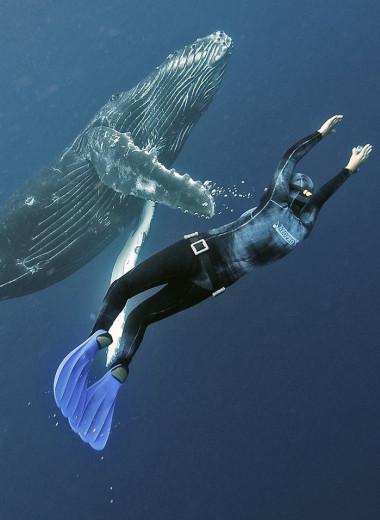 Горбатый кит не смог проглотить человека, и вот почему