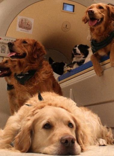 Мозг собак не отличил затылок от лица