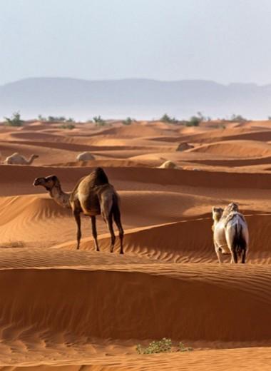 Как Саудовская Аравия привлекает туристов с помощью инстаграм-блогеров