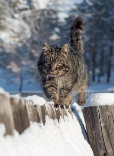 Некоторые люди способны считывать кошачьи эмоции. Ученые называют их заклинателями кошек