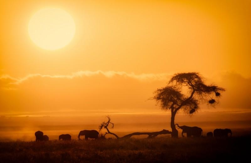 Слоны на фоне Килиманджаро: парк Амбосели, Кения