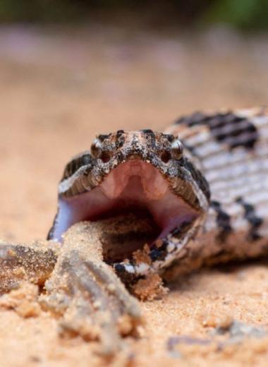 Ты то, что ты ешь: яд змеи тем сложнее, чем разнообразнее ее пища