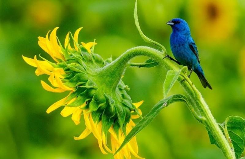 Изменение климата сократило ареал летнего размножения мигрирующих видов птиц
