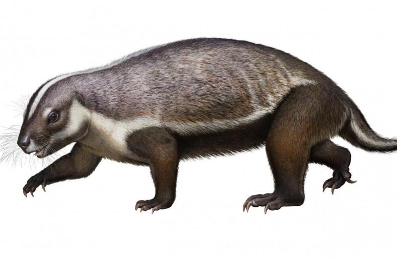 «Безумный зверь»: на Мадагаскаре нашли скелет странного древнего животного
