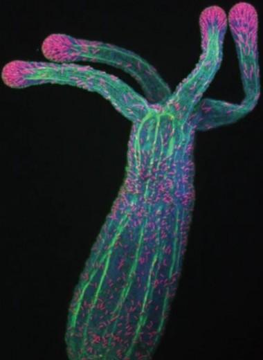 Сытые актинии вырастили больше щупалец