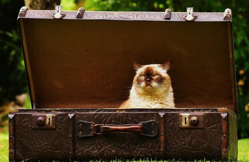 Как авиакомпании теряют ваш багаж