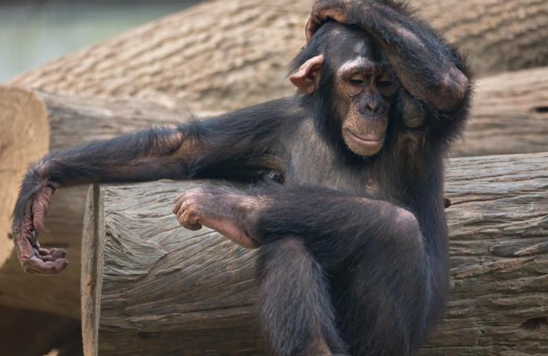 Самый умный: 5 случаев, когда животные демонстрировали невероятную сообразительность