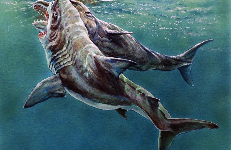 Древний кашалот потерял зуб в смертельной схватке с мегалодоном