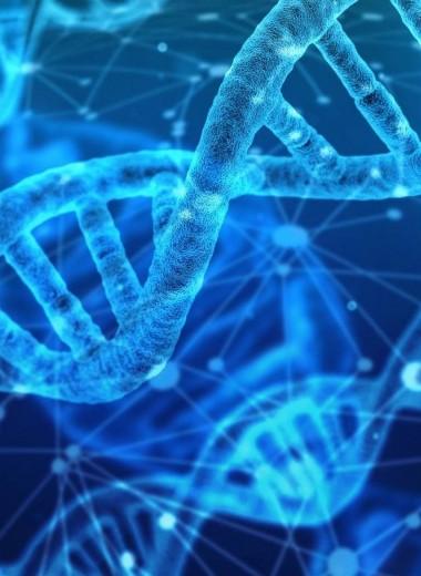 Как найти сломанную ДНК