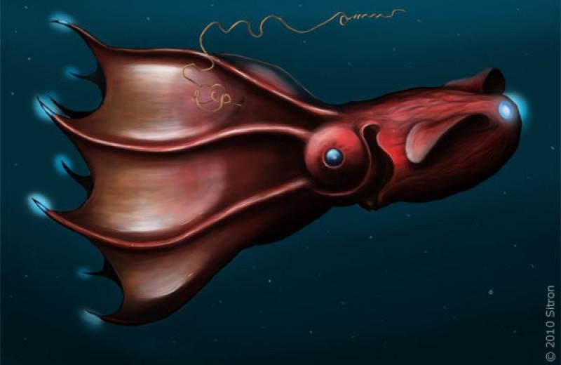 Давно утерянное ископаемое оказалось предком адского кальмара