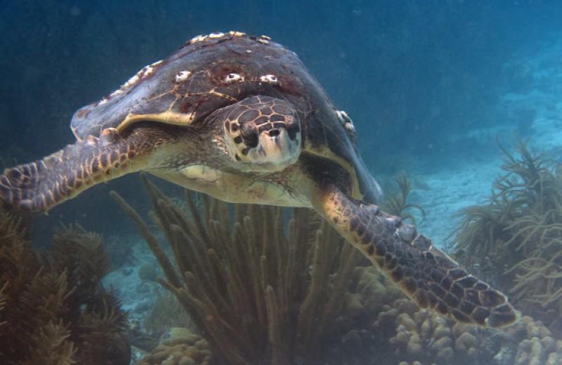 Панцири морских черепах оказались домом для тысяч микроскопических животных