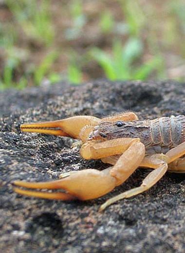Топ-10 самых ядовитых животных на нашей планете