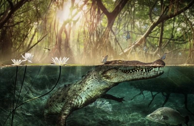 Африканские крокодилы путешествовали в Америку миллионы лет назад